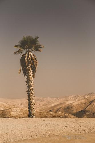 travel photography israel desert palmtrees negev fullframe photodujour hoyacircularpolarizer judaen canoneos6d thousandwordimages dustinabbott dustinabbottnet tamronsp2470mmf28vcusd