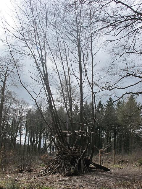 Spearywell Wood