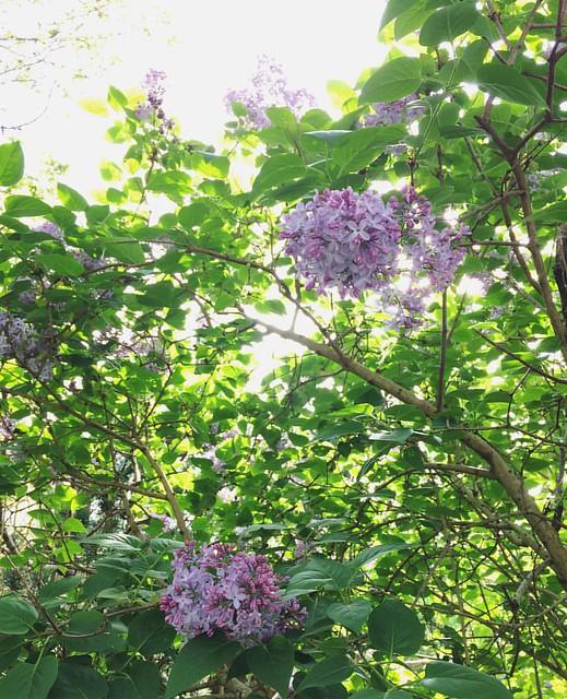 Mmm, lilac. 💜
