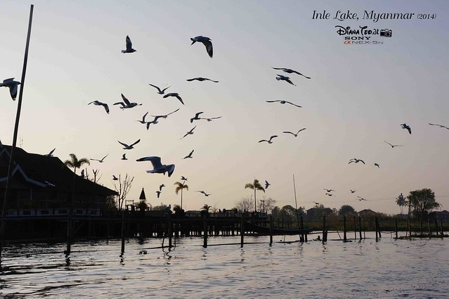 Myanmar, Inle Lake 04