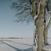 Long Shades . . . by Geraldos 