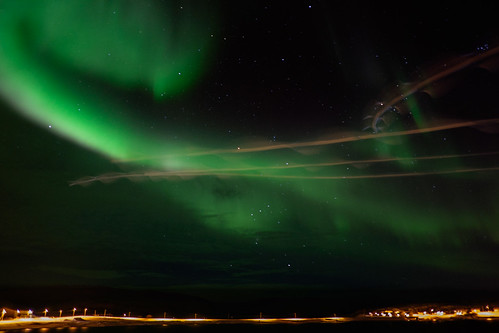 Northern lights and seagulls...