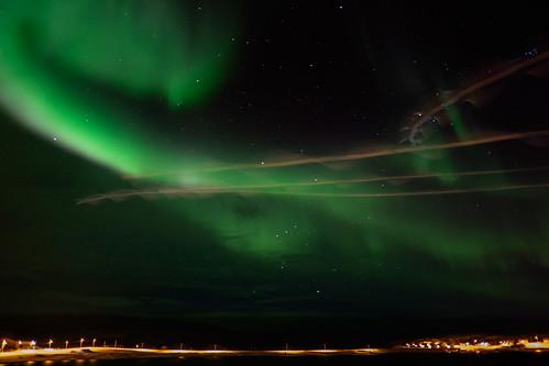 Northern lights and seagulls...