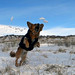 MIN 299_Snow-Catching Dog_Right