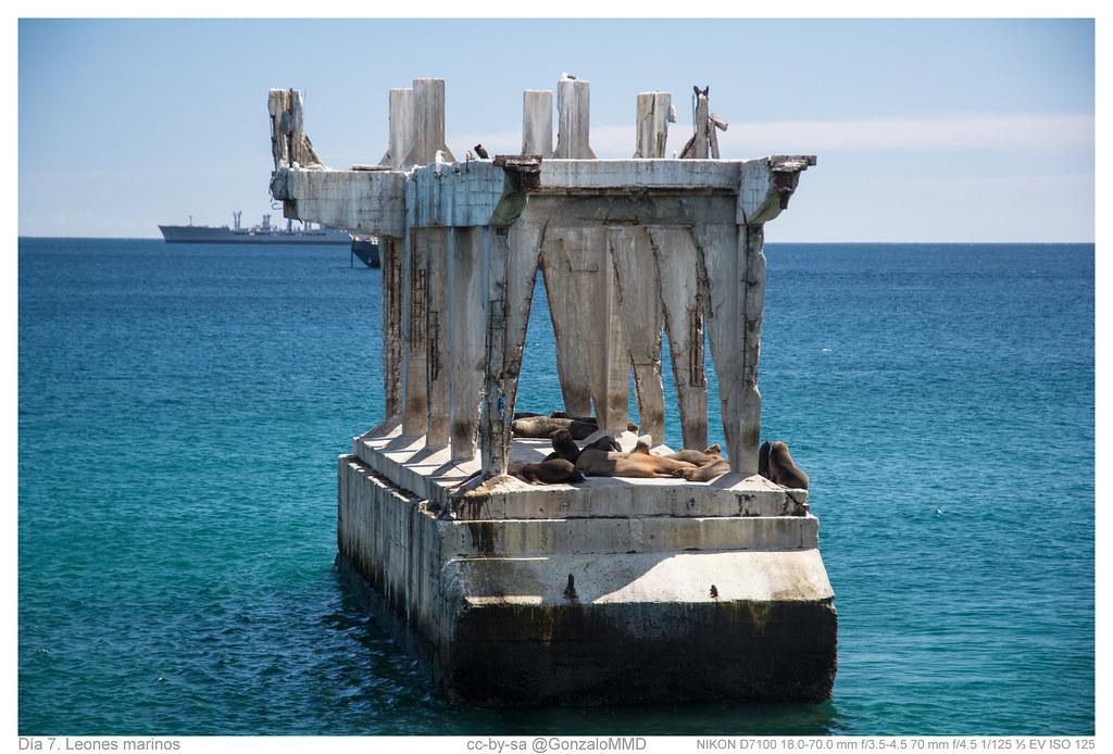 Día 7. Leones marinos