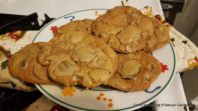 Chocolate Chip Cookies, finished and still warm, February 2016