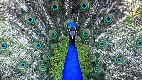 Symmetry in Blue