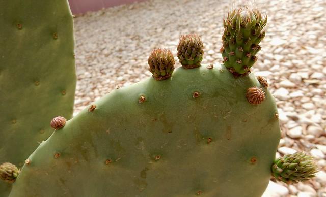 Villa Diletta Cactus