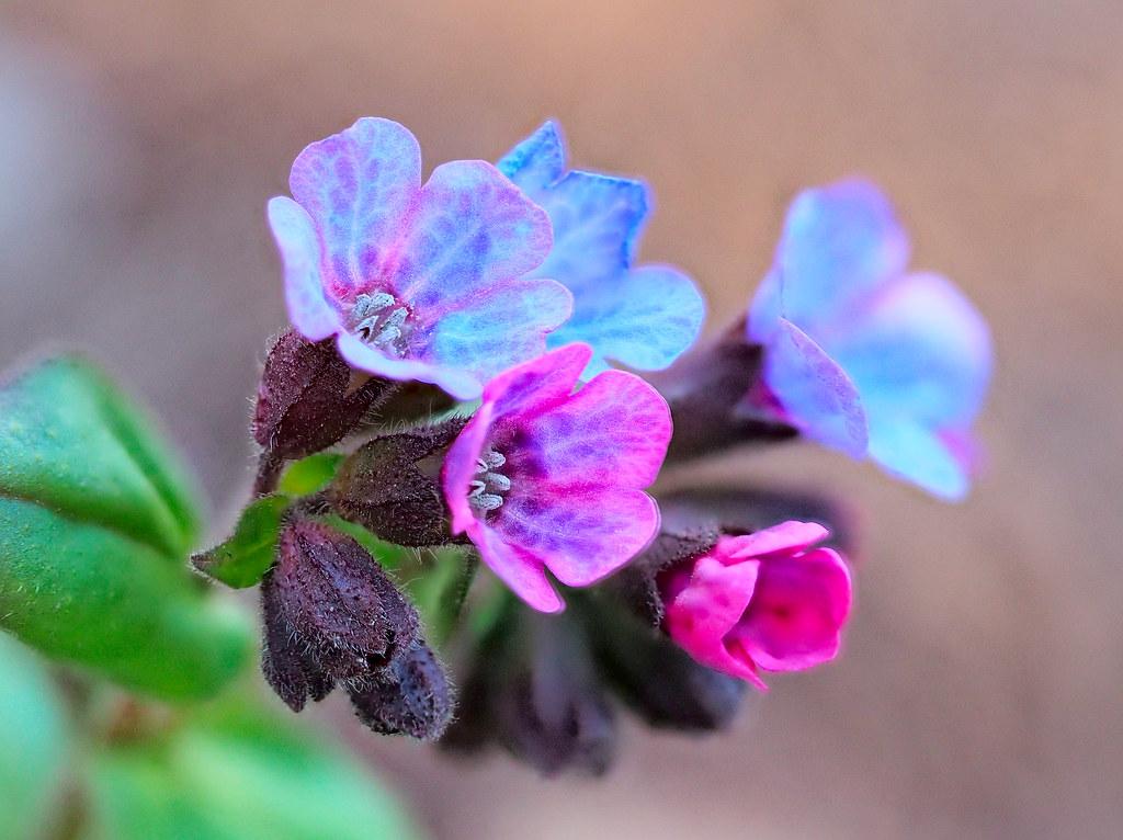 Spring bouqet