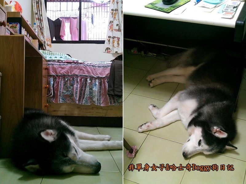 Doggy保暖墊03
