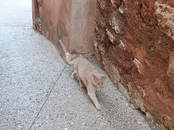 chat dans les ocres