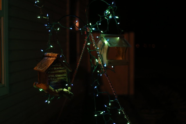 the birds' Christmas lights