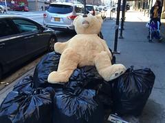 2016_01_03_bear-on-trash_3