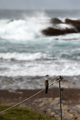 A rope with a view (Point Lobos - V)