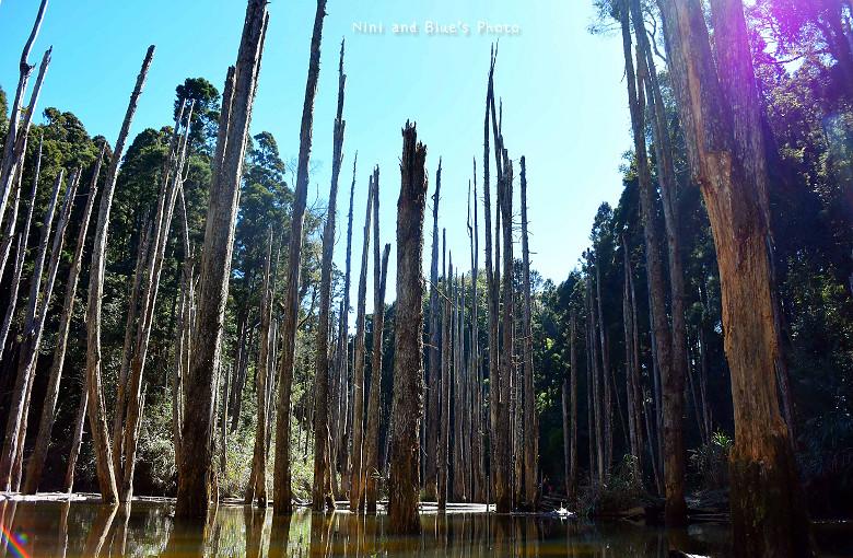 南投忘憂森林15