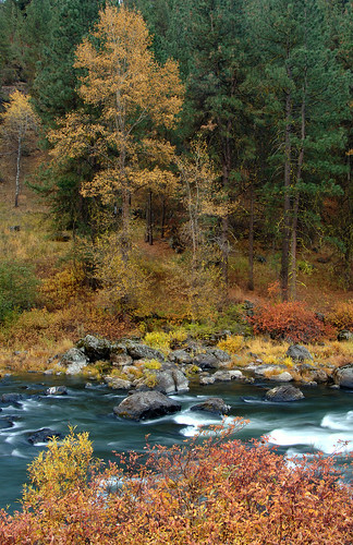 watershed fremontwinema fremontwinemanf fremontwinemanationalforest southcentraloregon oregon usforestservice nationalforest nationalforests fallcolor autumncolors autumn pacificnorthwest river spragueriver rapids stream forest trees moss boulders naturalresources southernoregon fallcolors