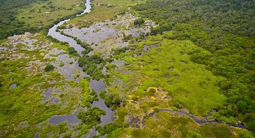 green water sumatra indonesia rivers wetlands climatechange biodiversity tropicalrainforest tropicalforest peatlands kamparpeninsula riausumatra tropicalbiodiversity naturalclimatesolutions