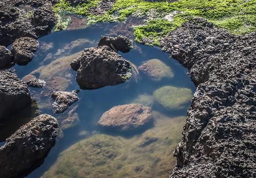 Tidal Pool Colors
