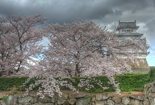 Himeji Castle area on APR 05, 2016 vol02 (2)