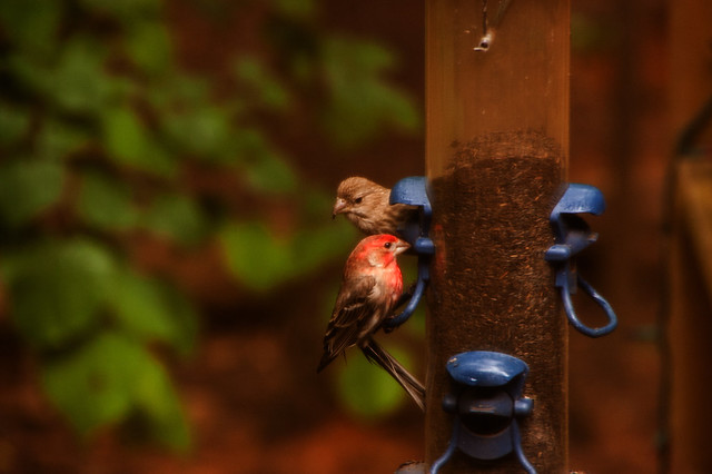 Finch time (3)