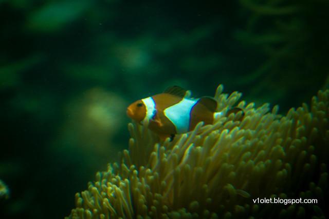 Pulau Putri Ikan4-2349rw