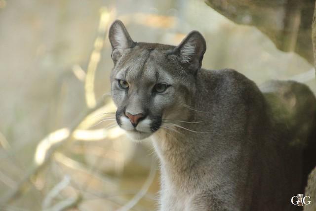 Zoo Bremerhaven 10.04.16 2.Teil63