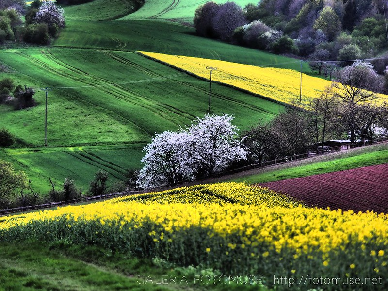 Spring Of The Yellow