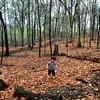 Forest boy. 821d