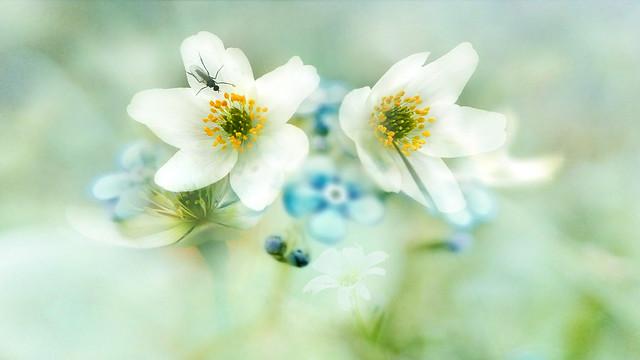 Flowers in spring.
