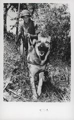 Carl Pedrotti and Scout Dog 'Wotan', 11 July 1968
