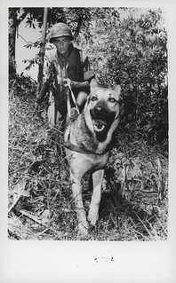 Carl Pedrotti and Scout Dog 'Wotan', 11 July 1968