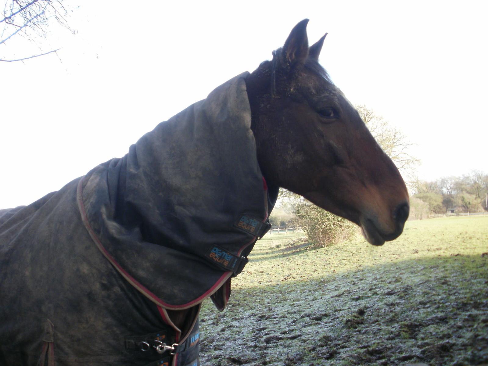 Tattenham Corner horse 1 OLYMPUS DIGITAL CAMERA