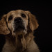 dog studies 1 by Ulrike Schumann