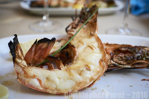 Lisbon ~ Tiger Prawn (before consumption)