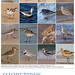 Shorebirds Poster by Pete Grube