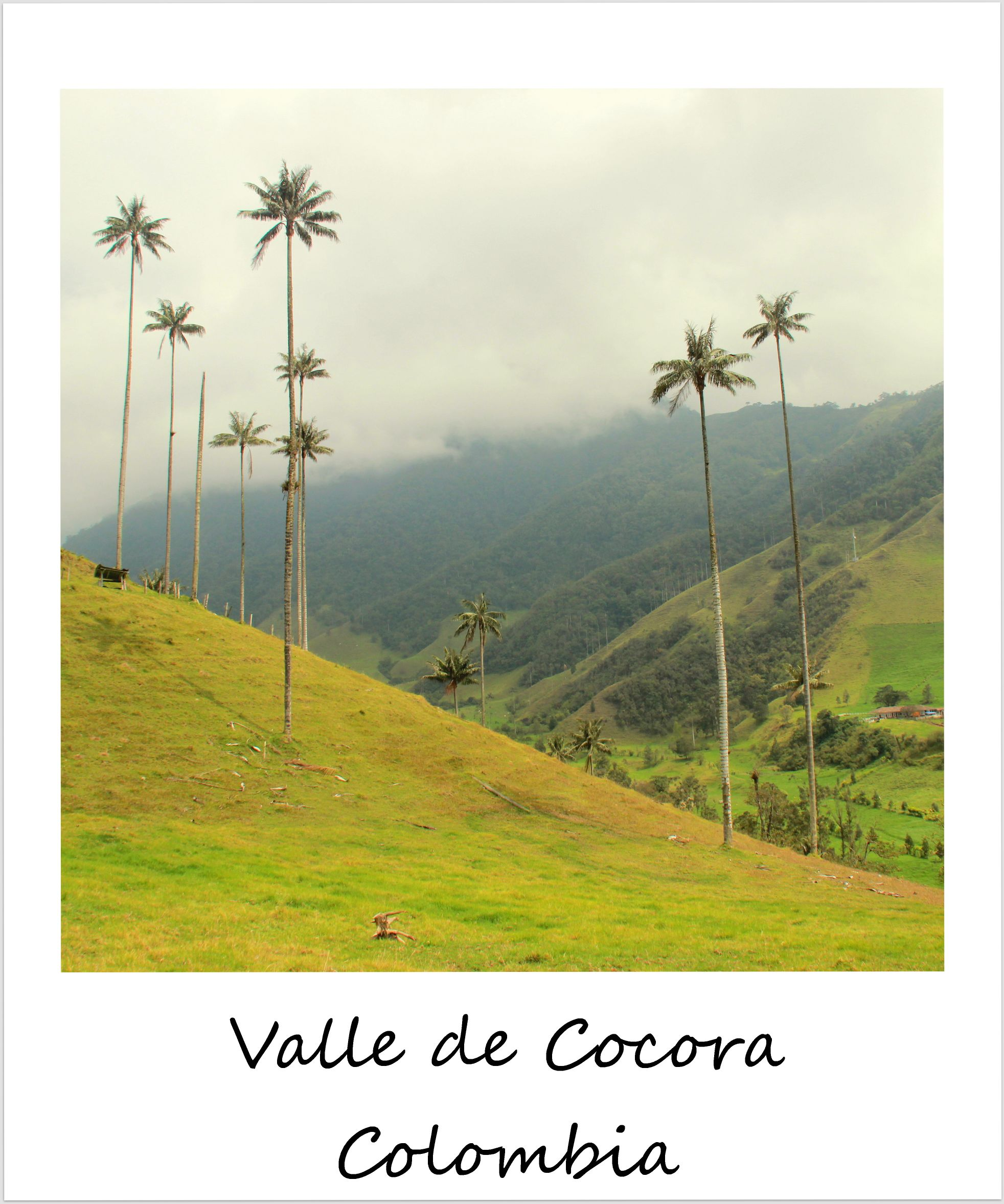 polaroid of the week colombia valle de cocora