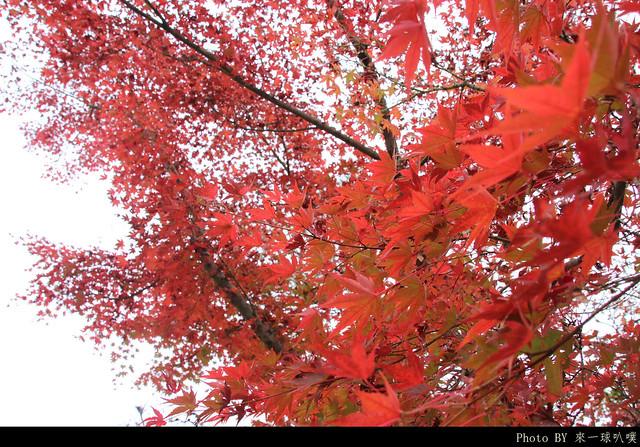 京都-永觀堂034