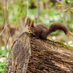 2016 mars écureuils