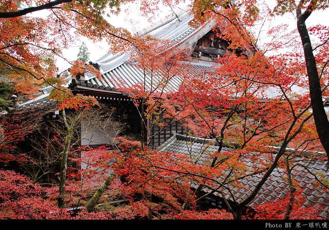 京都-永觀堂075