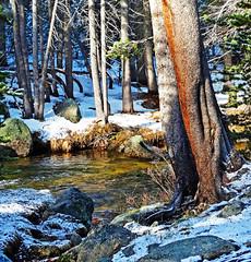 New Sun on New Snow, Tuolumne River, Yosemite 5-15