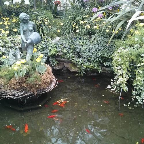 Goldfish, Allan Gardens #toronto #allangardens #gardens #fish #goldfish