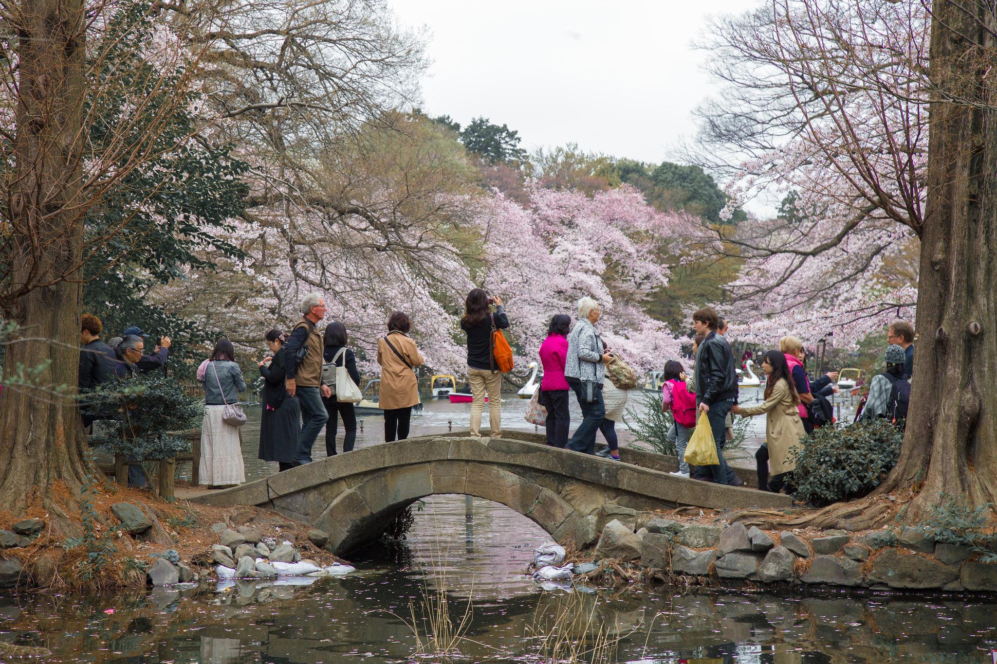 2016-04-01 井の頭公園 001-5