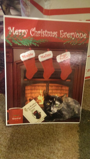 Our Secret Paws card from Melissa and Mudpie.