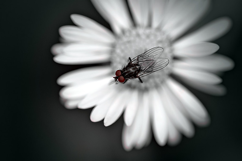 A fly in a flower
