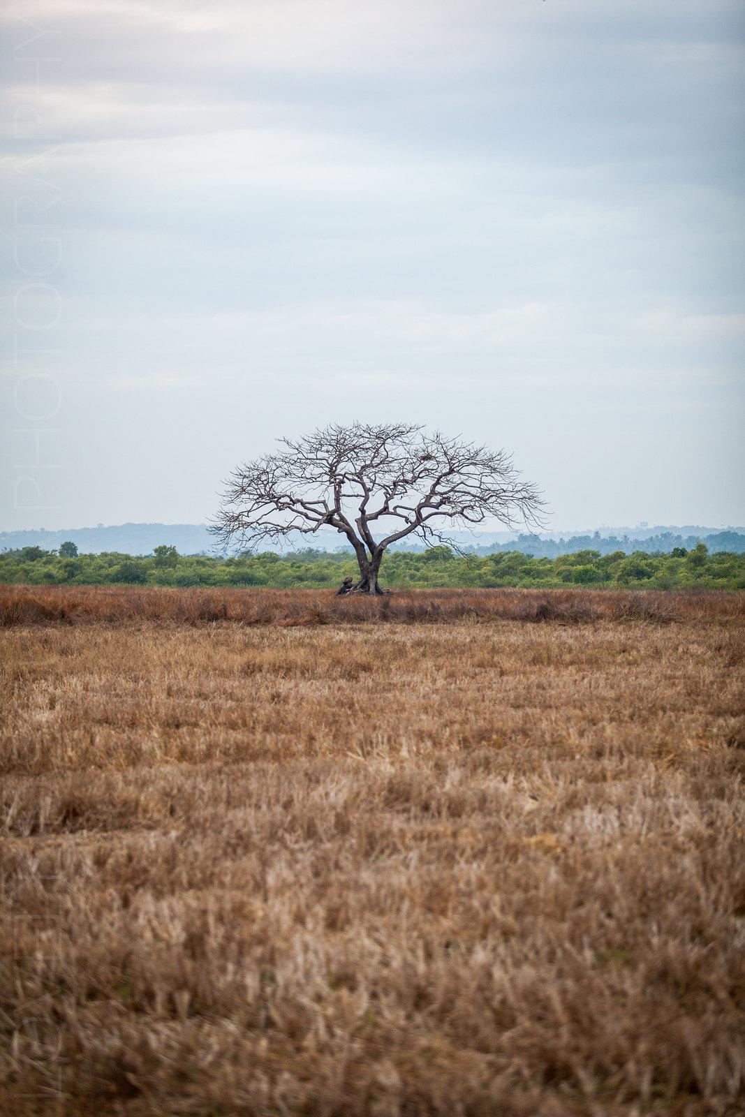A tree in the fields