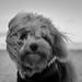 Fluffy Face Kippie by Naetrogen