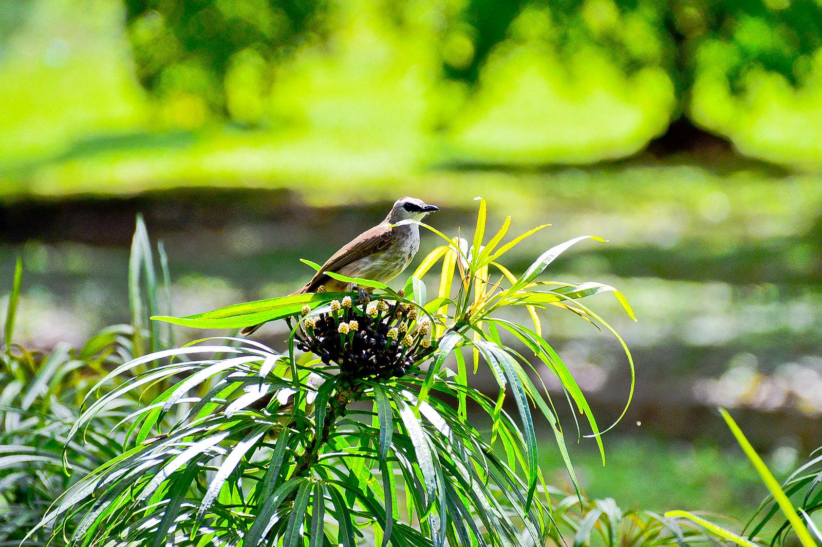 Singapore Botanic Gardens 2016