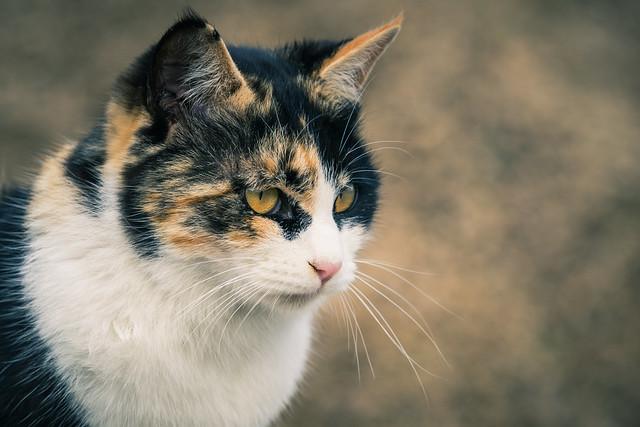 20160217_01_野良猫
