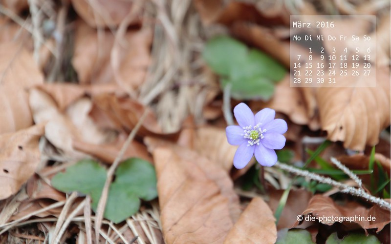 blumeimlaub_maerz_kalender_die-photographin