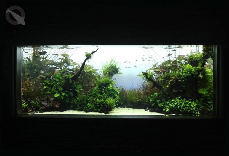 KQ Sumida Aquascape 12